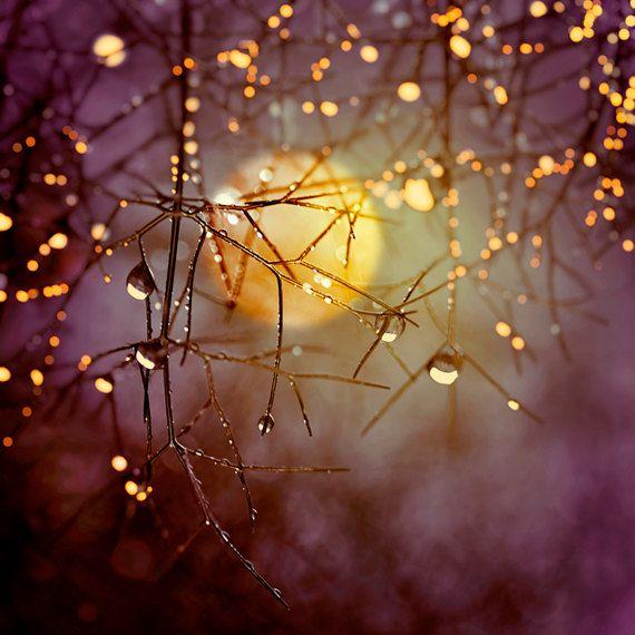 d67e84c3ab888bbd8a44206e7dc4573d--harvest-moon-autumn-harvest